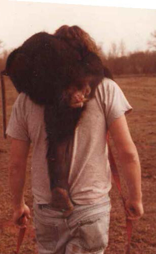 Ingersoll walking with chimp